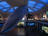 manhattan-whale-museum-natural-history